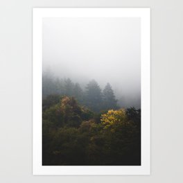 Autumn forest wrapped in fog Art Print