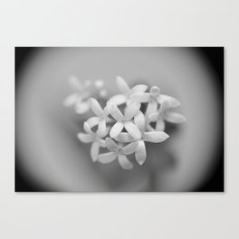 Flower No.1 Canvas Print