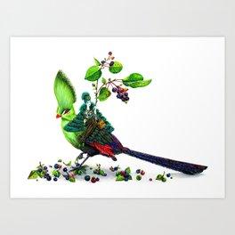 Turaco Art Print