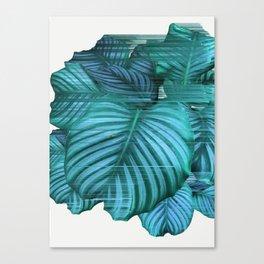 Fast Calathea Canvas Print