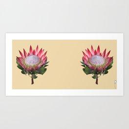 Tulip_Sugerbush_King Protea Art Print