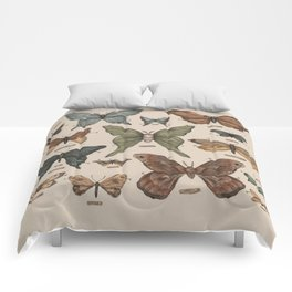Butterflies and Moth Specimens Comforters