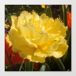 Sunny Yellow Tulip Canvas Print