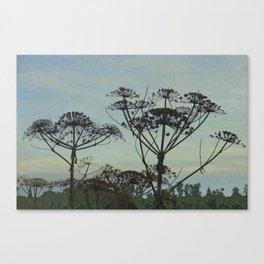 Heracleum Canvas Print