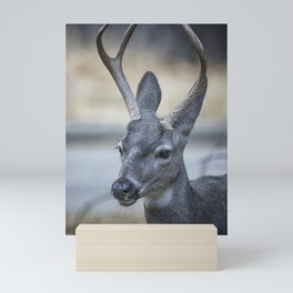 Buck with Two Pronged Antlers Mini Art Print