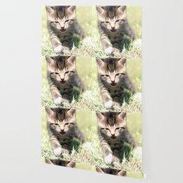 Katze, Cat Wallpaper
