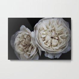 Petticoat Roses Metal Print