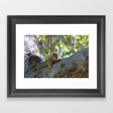 Just Hanging! Framed Art Print