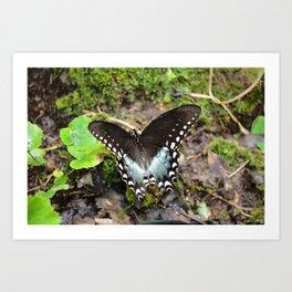 Wonderous Swallowtail Art Print