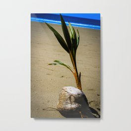 Sprouting Palm Tree Metal Print