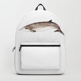 Beaked whale Backpack