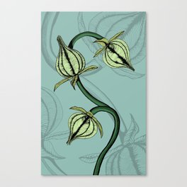 Buds Full Color Canvas Print