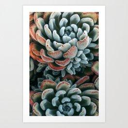 Autumn Succulent #1 Art Print