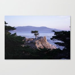 Lonely Cypress in October Canvas Print
