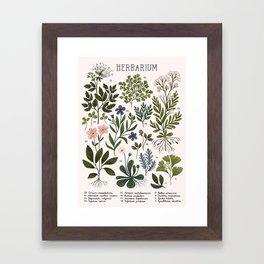 Herbarium ~ vintage inspired botanical art print ~ white Framed Art Print