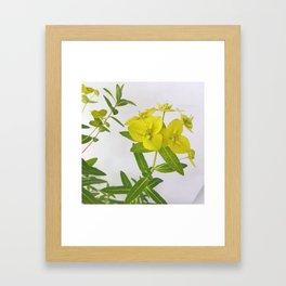 Euphorbia Cornigera Framed Art Print