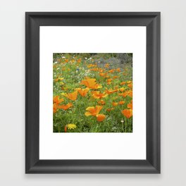 california poppy VIII Framed Art Print