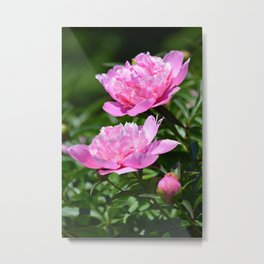 Pink Peony Pair Flower Photography - Bring the Outdoors In Metal Print