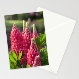 Pink flower towers (small-flowered lupin) Stationery Cards