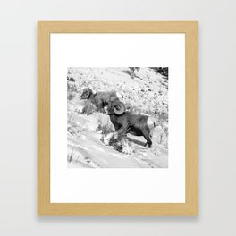 2 Amazing Bighorn Sheep in Black and White by OLena Art for #Society6 Framed Art Print