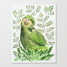 Kakapo in the ferns Canvas Print