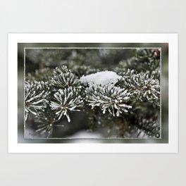 Snowy Evergreen Art Print