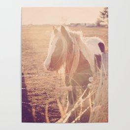 Horse in Springtime Sun Poster