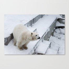 Polar Bear II Canvas Print