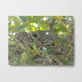 Dove Nest Metal Print