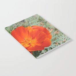 California Poppy Notebook