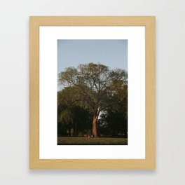 Big tree Framed Art Print