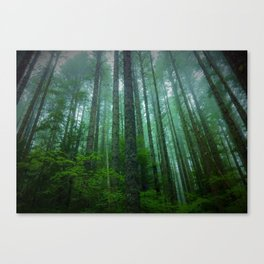 Misty Mountain Forest Canvas Print