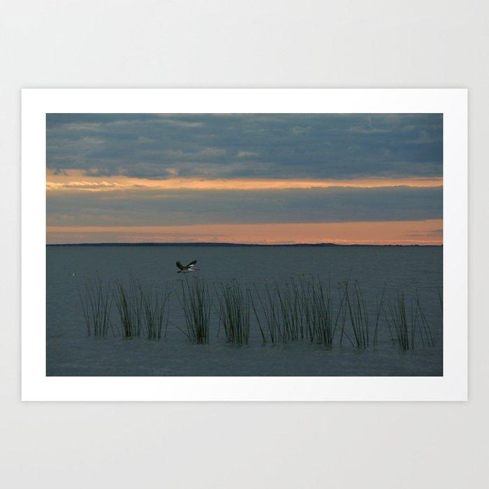 A Pelican Art Print