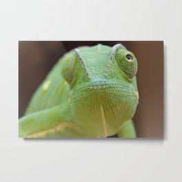 Chameleon Face Metal Print