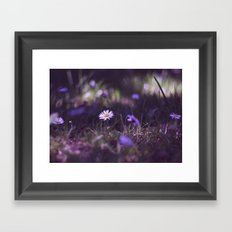 midnight daisy  Framed Art Print