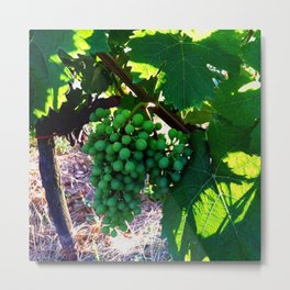 Grapes of Wrath Metal Print