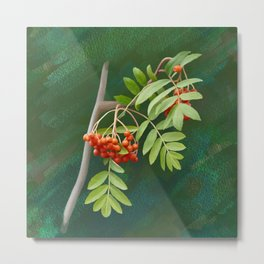Rowan tree Metal Print