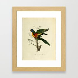 """Blue Bellied Parrot"" by Sarah Stone, 1790 Framed Art Print"