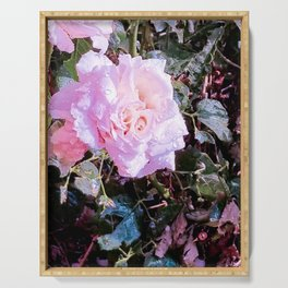 Pink Rose of Summer Serving Tray