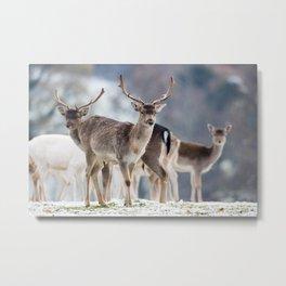 FALLOW DEER ON SNOWY GROUND Metal Print