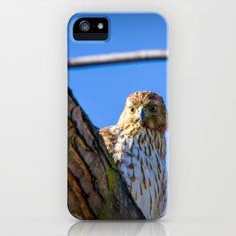 Sharp-Shinned Hawk Peaking iPhone Case