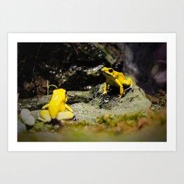 Golden Dart Frog Art Print