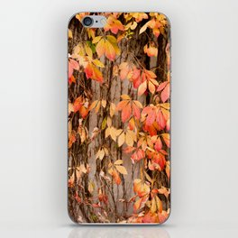 Vitaceae family ivy wall abstract Parthenocissus quinquefolia iPhone Skin