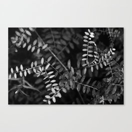 Black and white nature Canvas Print