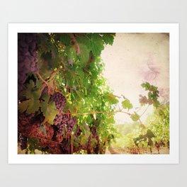 Vineyard Vines II Art Print