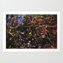 Robin in Cherry Tree Art Print