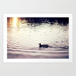 Swimming at Sunset Art Print