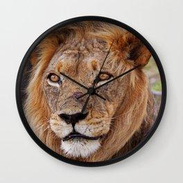 Big lion - Africa wildlife Wall Clock