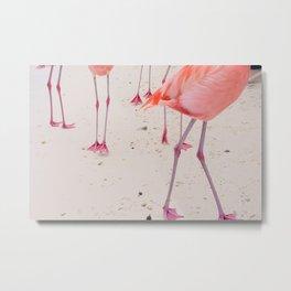 Flamingo Feet Metal Print