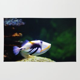 Picasso Triggerfish Rug